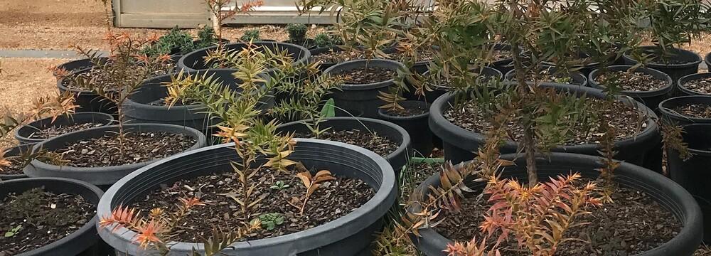 Family Workshop: Plant and Nurture