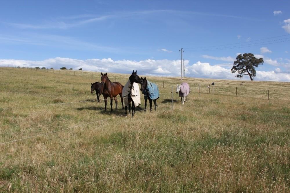 Repairing grassland