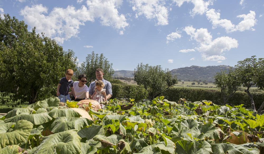 Workshop: In the Garden – Summer Vegetables