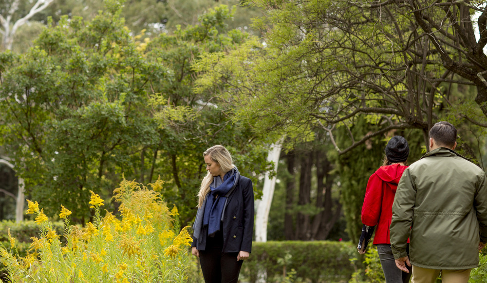 Walk: A home among the wattle trees
